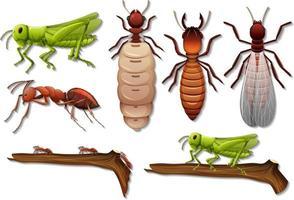 uppsättning olika insekter isolerad på vit bakgrund