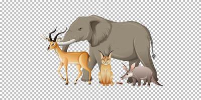 Gruppe des wilden afrikanischen Tieres auf transparentem Hintergrund