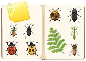 Insektensammlung auf weißem Hintergrund vektor