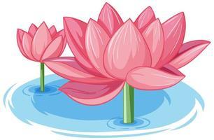 två rosa lotus i vatten vektor