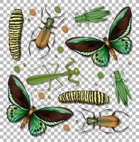 uppsättning olika insekter på transparent bakgrund vektor
