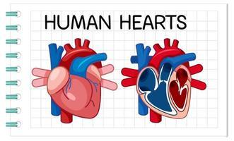 informationsaffisch av mänskligt hjärta vektor