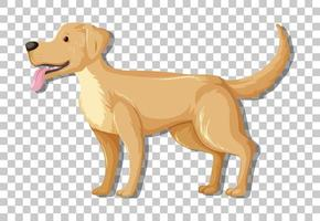 gul labrador retriever i stående position tecknad karaktär isolerad på transparent bakgrund