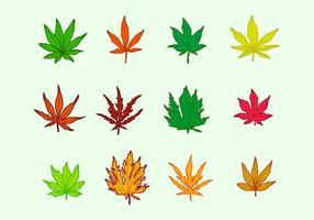Japanische Ahornblätter