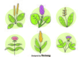 Ört blommor växt vektor