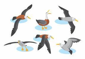 Albatross vektor uppsättning