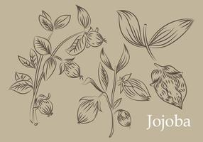 Handdragen Jojoba Vector