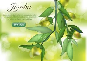 Grön jojoba växt vektor