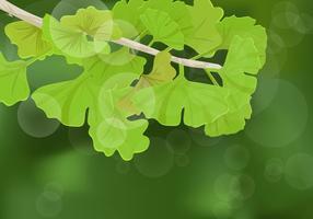 Ginkgo Blätter Hintergrund vektor