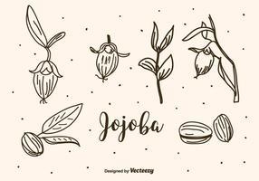 Jojoba-Vektor