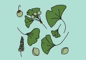Ginkgo Blätter vektor