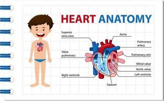 Informationsplakat des menschlichen Herzdiagramms