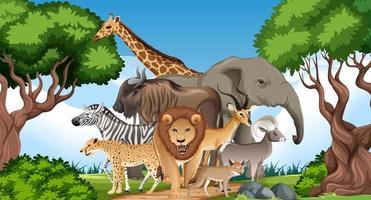 Gruppe von wilden afrikanischen Tieren in der Waldszene