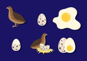 Flache Wachtel mit Ei vektor