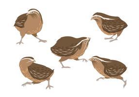 Illustration av Brown Quail vektor