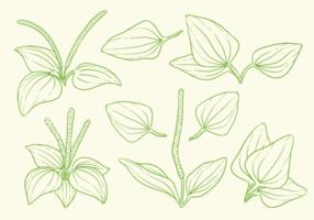 stora växtblad örter vektorer