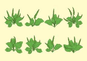 Plantain ikoner Set vektor