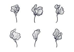 Süße Erbsen-Blumen-Skizze vektor