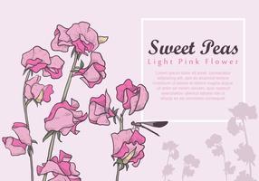 Süße Erbse Hellrosa Blume vektor