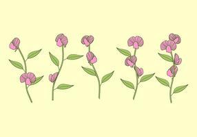 Süße Erbsen Pflanze Free Vector