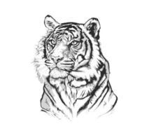 Schwarz-Weiß-Ketch eines Tigergesichts vektor