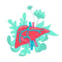 anatomisches Lebersystem