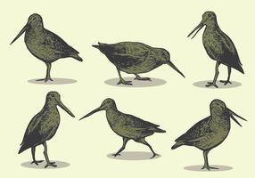 snipe fågel handritning vektor