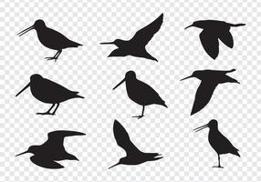Snipe Vögel Silhouetten vektor