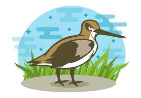 Kostenlose Snipe Bird Vector