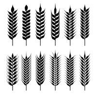 Weizen-Ohren-Sammlung vektor