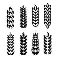 Weizen Ohren Symbol Vektor