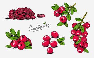 Rote Moosbeeren Hand gezeichnete Gekritzel-Vektor-Illustration