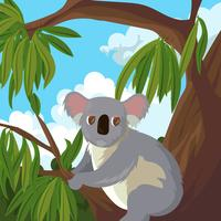 Koala im Gummibaum-Vektor vektor