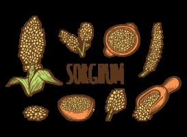 Handgezeichnete Sorghum Vektoren