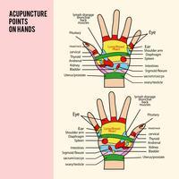 Akupunkturpunkt på händervektor