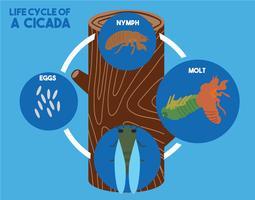 Cicada livscykel vektor illustration