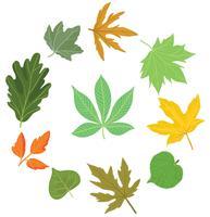 Freie Verschiedene Blätter Vektoren