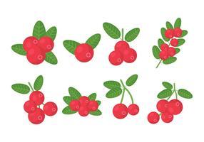 Kostenlose Cranberries-Vektor-Sammlung