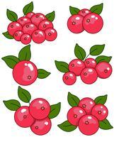 Vektor-Cranberry-Ikonen-Set