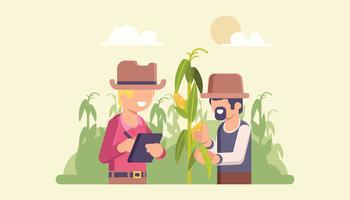 Landwirte, die auf Maisqualität überprüfen vektor