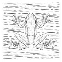 Freie Hand gezeichnete Vektor-Frosch-Illustration