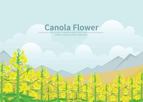 Kostenlose Canola-Blumen-Illustration vektor