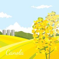 Canola-Bauernhof-Feld-freier Vektor