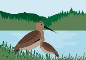 Schnepfen Vogel Vektor