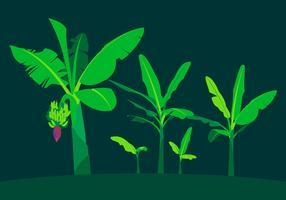 Bananenbaum-freier Vektor