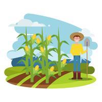Corn Stalks Illustration