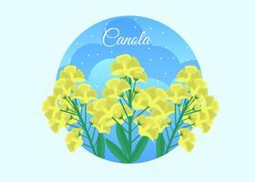 Gratis Canola Vector Illustration