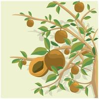 Pfirsichbaumillustration Hintergrund vektor