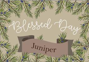 Juniper Card Vector