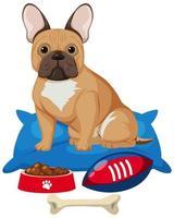 fransk bulldog med hundmat och benleksak på vit bakgrund